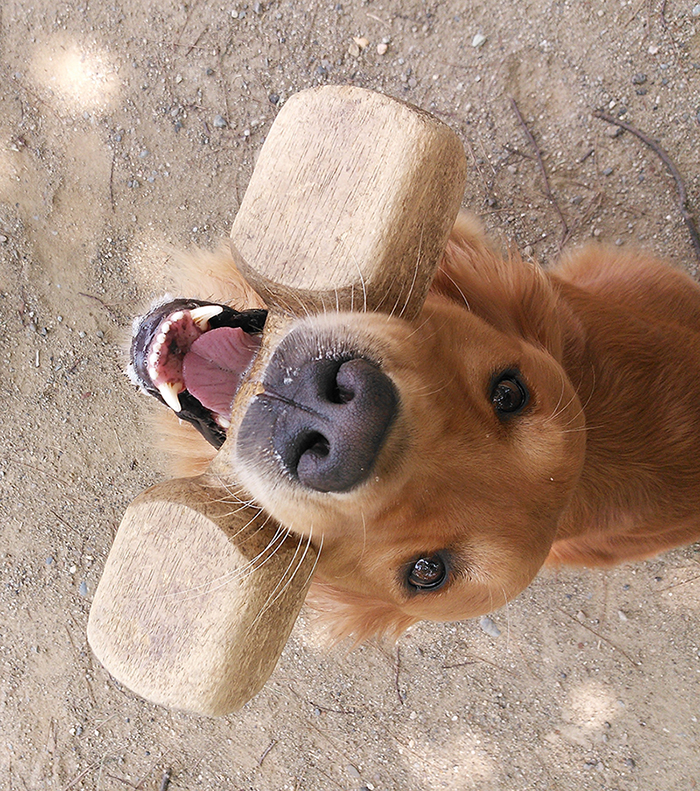 犬のしつけ写真